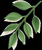 elements summer sale banner NK5W2VA leaf 2