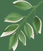 pálma banner